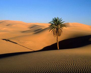 Последняя сильная засуха на западе Африки произошла в 1970-80х годах. Фото fotoart.org.ua