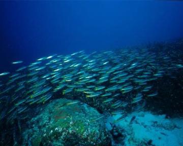 В мировом океане найдены почти 18 тысяч неизвестных видов