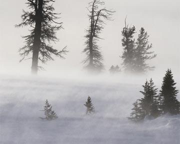 В Донецкой области мороз убил 10 человек
