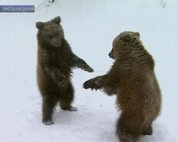 В Киевском зоопарке поселились Потап и Настя