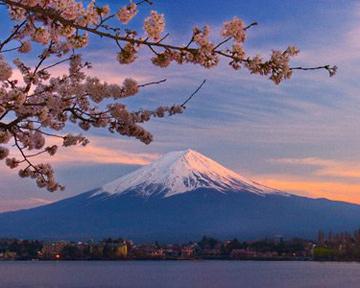 Сакуры и наилучших местах где можно