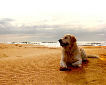 В Италии создали первые пляжи для собак