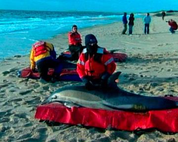 дельфины и киты на берег