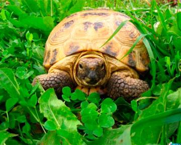 Древнего пермского эунтозавра признали родоначальником всех черепах.  Такой вывод сделали американские ученые в ходе...