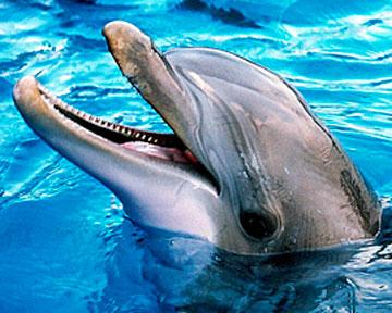 Дельфины могут бодрствовать до 15 суток
