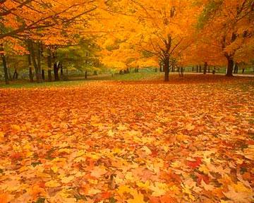 Будет теплая для ноября погода
