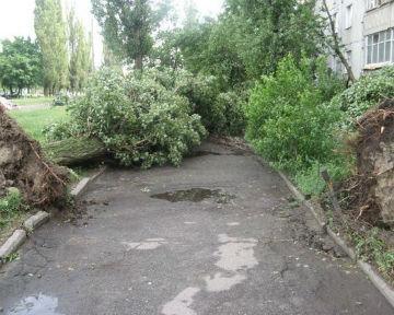 Ураган в сумах повалил десятки
