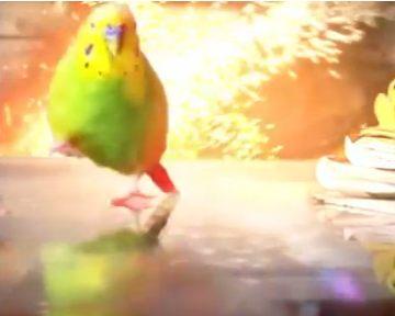 В сети появился ролик об эпичном попугае, изображающем героев голливудских фильмов (видео)