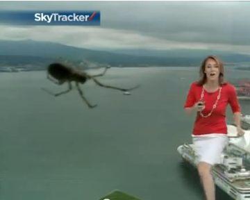 Канадскую ведущую прогноза погоды испугал гигантский паук в студии (видео)