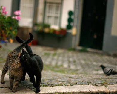 """Кошачья """"банда"""" в Англии ворует вещи у соседей"""