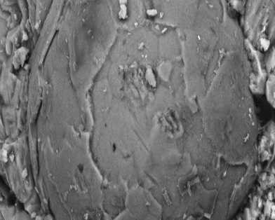 Ученые нашли древний эмбрион неизвестного существа