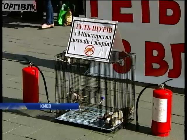 Протестующие принесли крыс к зданию Кабмина (видео) (видео)