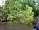 В Киеве ураган за полчаса повалил десятки деревьев