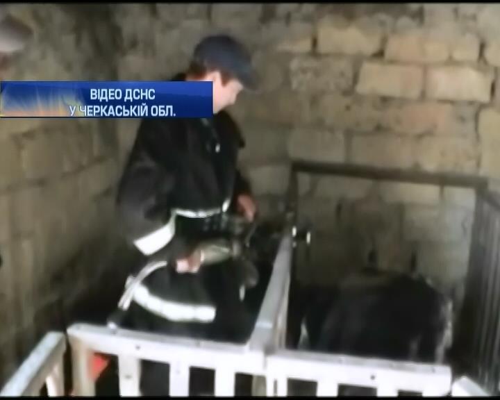 Спасатели из Черкасс освободили козу из железного плена (видео) (видео)