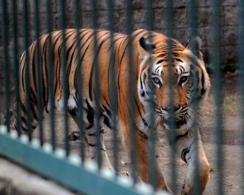 Животных беглого экс-министра Клименко приютил частный зоопарк (видео)