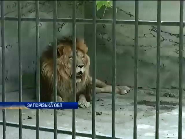 Диких тварин екс-мiнiстра Клименка прийняли у приватному зоопарку (видео)