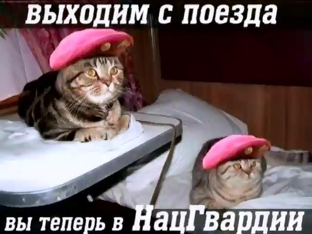Алла Щелычева сняла сюжет - забрали в Нацгвардию (видео) (видео)
