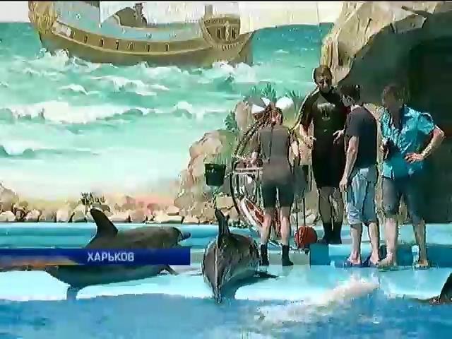 Дельфины из Донецка прибыли в Харьков и готовы к тренировкам (видео) (видео)
