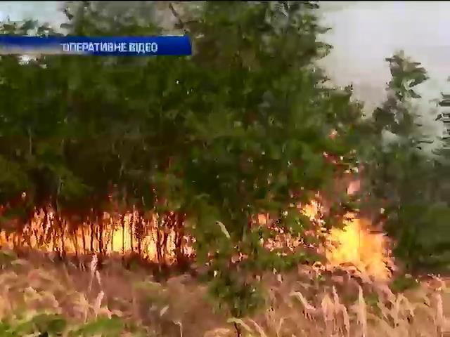 Пiд Миколаeвом внаслiдок пожежi вигорiло 8 га степу (видео)
