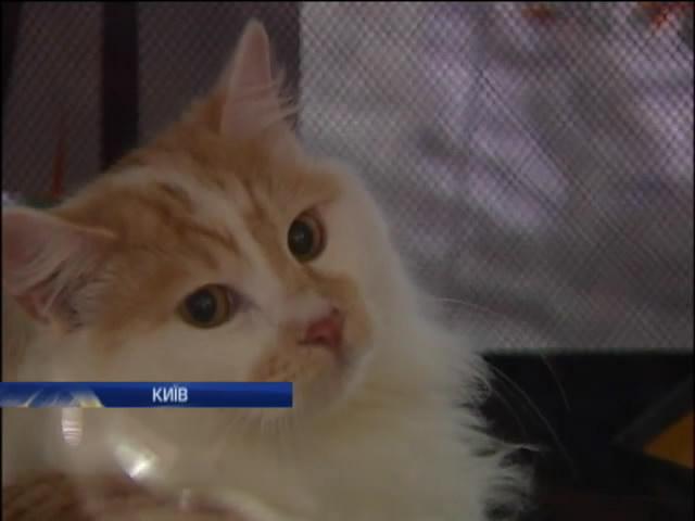 У Киeвi продавали породистих котiв на пiдтримку вiйськових (вiдео) (видео)