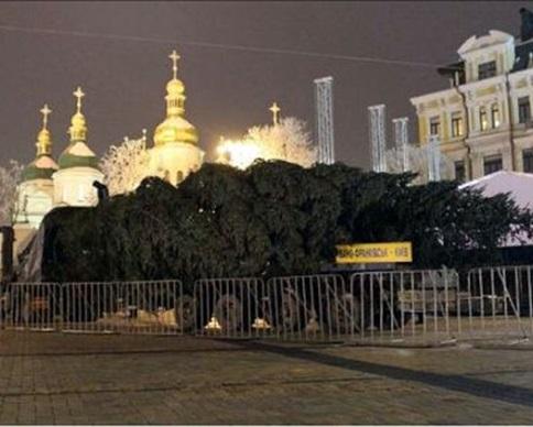 """В Киев привезли 24-метровую """"йолку"""""""