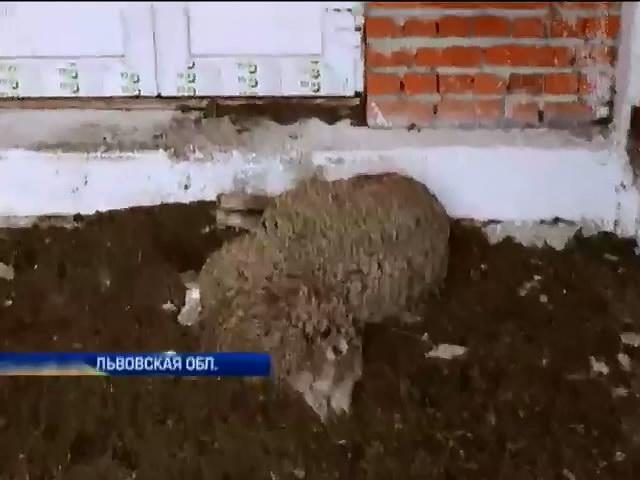 На Львовщине фермер заморил голодом экзотических животных (видео)